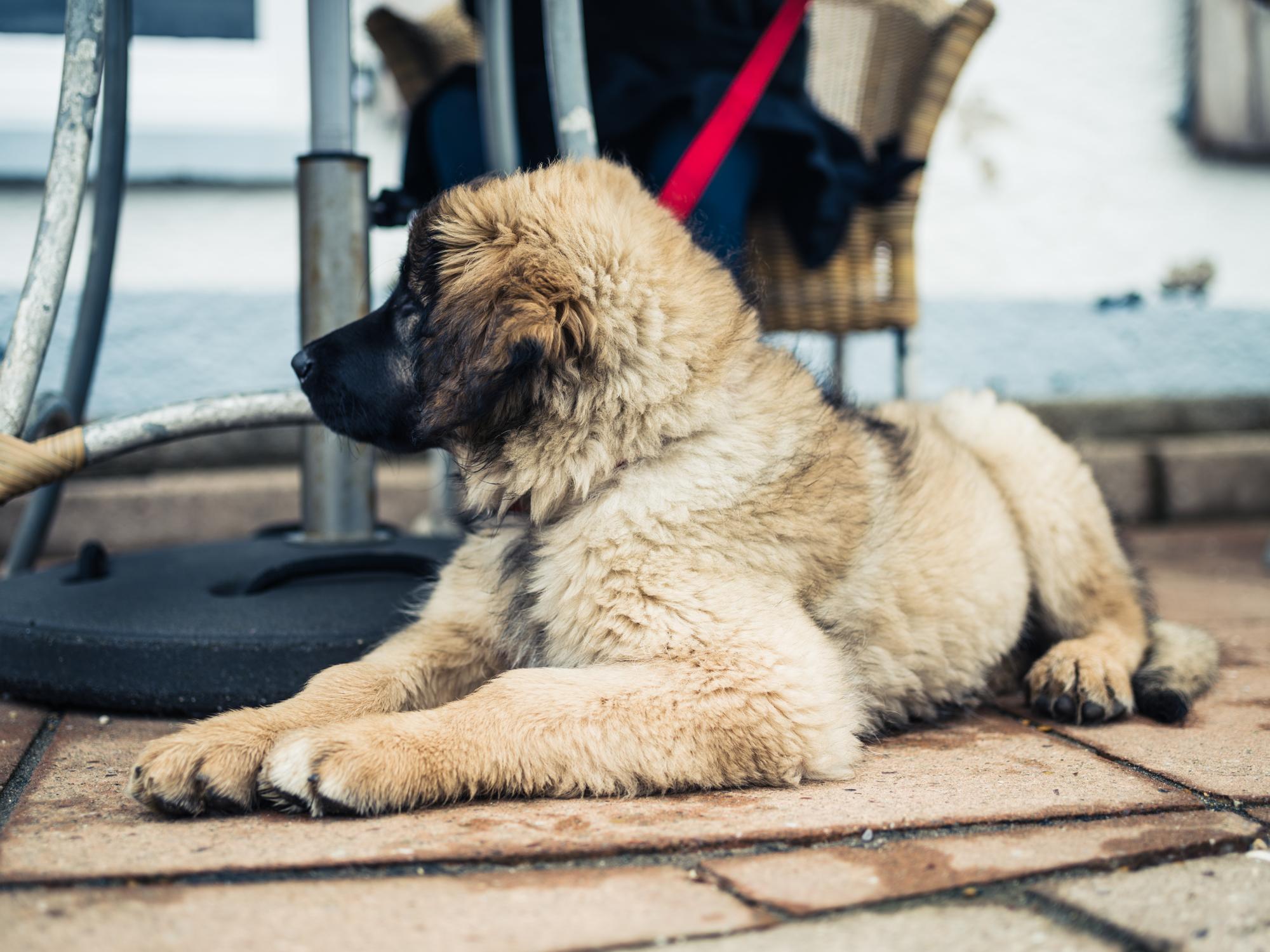 pet-friendly patios